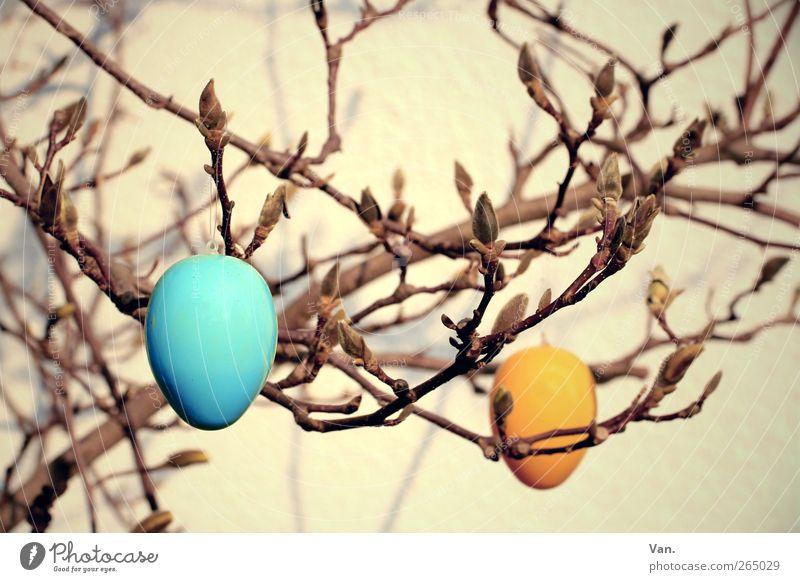 Ostern in Magnolien Natur blau Baum Pflanze gelb Wärme Frühling orange Ostern Kunststoff Ei Blütenknospen Feiertag Osterei Zweige u. Äste Magnolienbaum