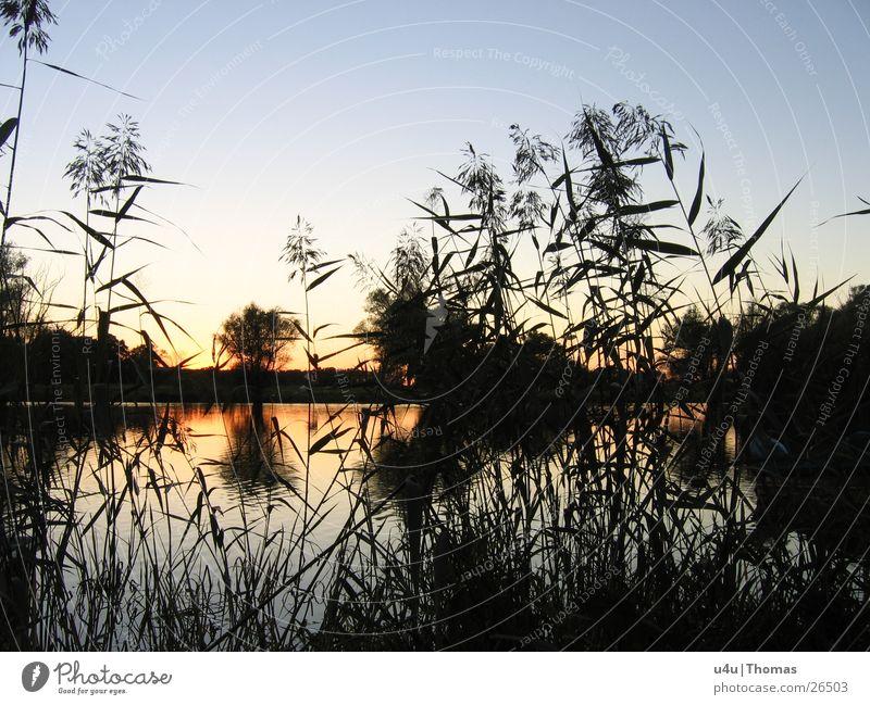 Sunrise See Sonnenuntergang Schilfrohr Horizont Wasser Fluss Abend
