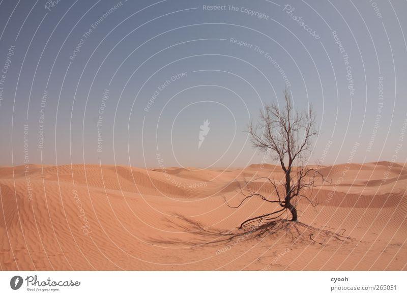 überleben Umwelt Landschaft Sand Himmel Wolkenloser Himmel Sommer Klima Schönes Wetter Wärme Dürre Pflanze Baum Wüste kämpfen dehydrieren Wachstum