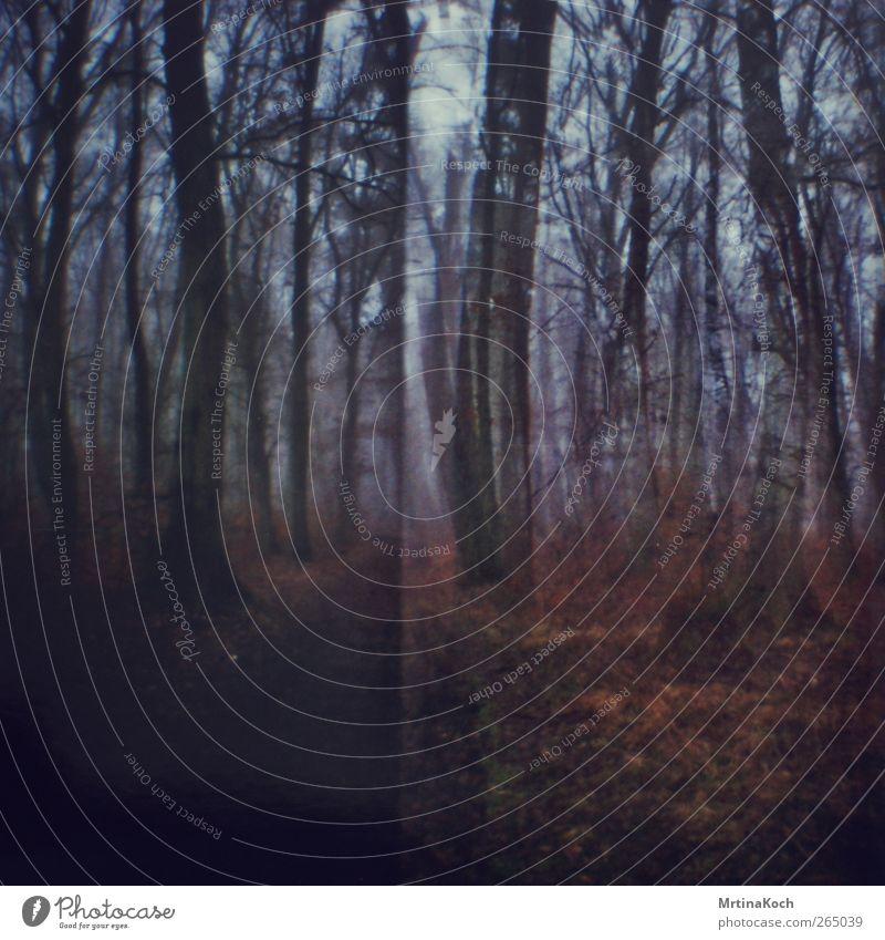 dust and echoes. Umwelt Natur Herbst Winter Schönes Wetter Nebel Park Wald Stimmung Tugend Laster achtsam gewissenhaft Vorsicht Gelassenheit geduldig ruhig