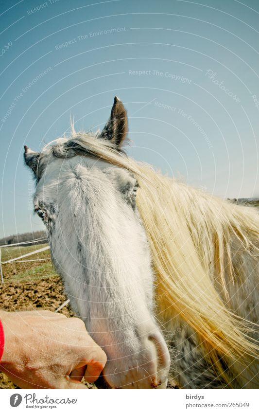 Fehldeutung erlaubt... Natur Hand Tier Wiese lustig hell glänzend außergewöhnlich gefährlich leuchten Pferd einzigartig Kommunizieren berühren Schönes Wetter