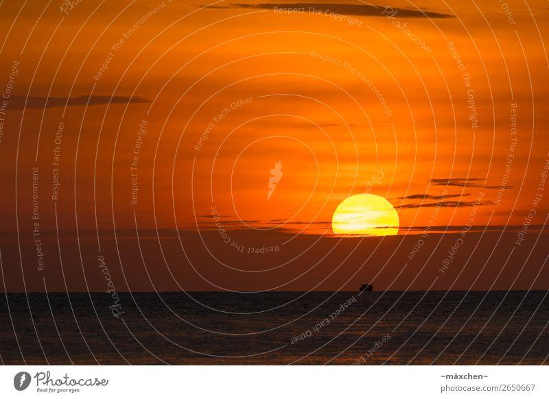Der Sonne entgegen... Natur Wasser Himmel Wolken Sonnenaufgang Sonnenuntergang Sonnenlicht Schönes Wetter Wärme Küste Meer Erholung genießen schön gelb orange