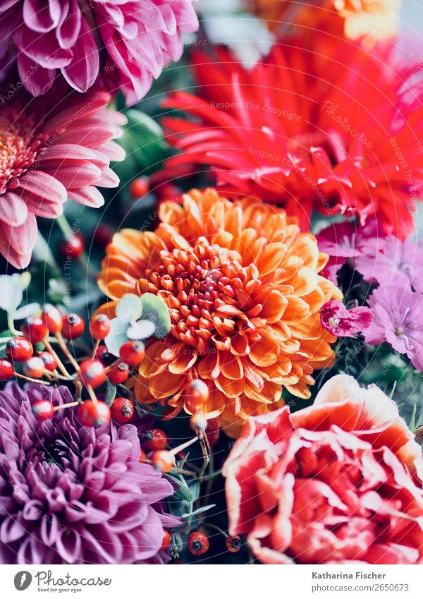 Blumenstrauss Pflanze Rose Blatt Blüte Dahlien Blühend leuchten exotisch schön positiv gelb grün violett orange rosa rot Blumenstrauß Geschenk schenken Freude