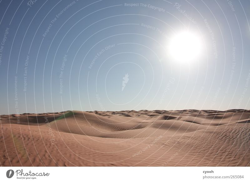 Sandmeer Natur Landschaft Luft Himmel Wolkenloser Himmel Sommer Klima Klimawandel Schönes Wetter Wärme Dürre Wüste Ferne nah trocken blau sanft Stranddüne