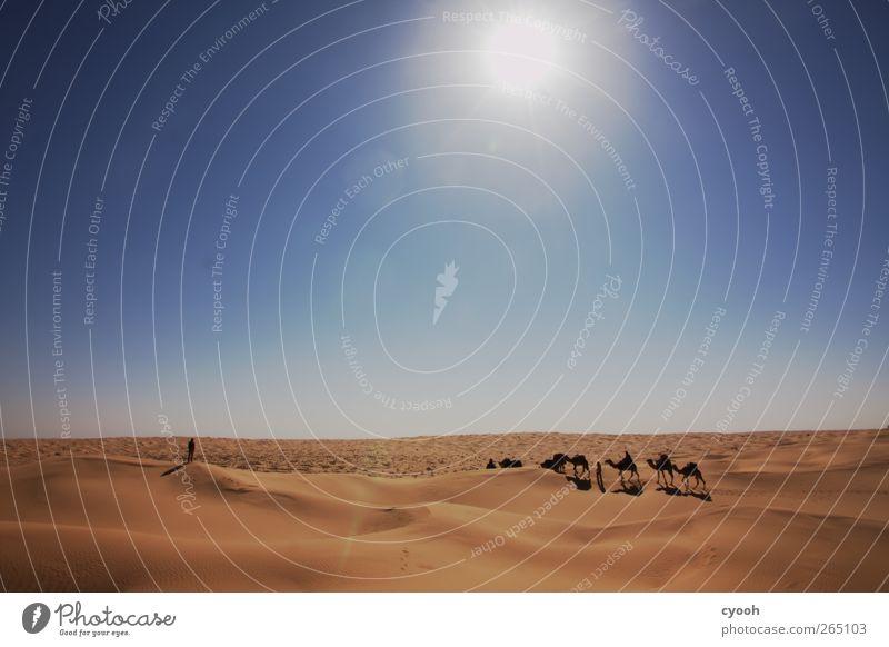 Karawane blau Ferien & Urlaub & Reisen Sommer Ferne Wärme Bewegung Sand Horizont Zeit Zusammensein Kraft laufen Klima wandern frei Wüste
