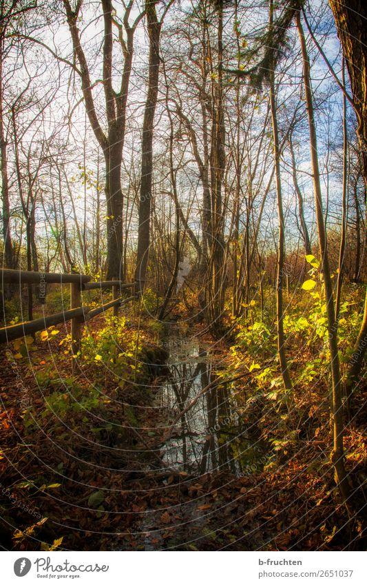 Herbststimmung Natur Baum Erholung Blatt ruhig Wald Religion & Glaube natürlich Freiheit orange braun Zufriedenheit Freizeit & Hobby wandern Park