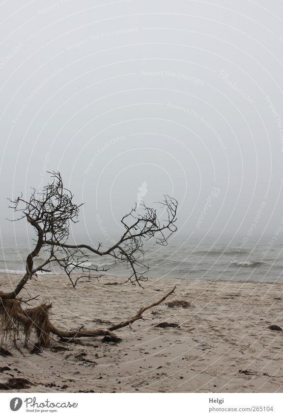 unberührte Natur... blau Wasser Baum Pflanze Strand Einsamkeit Umwelt Landschaft dunkel grau Küste Sand Stimmung braun Wetter