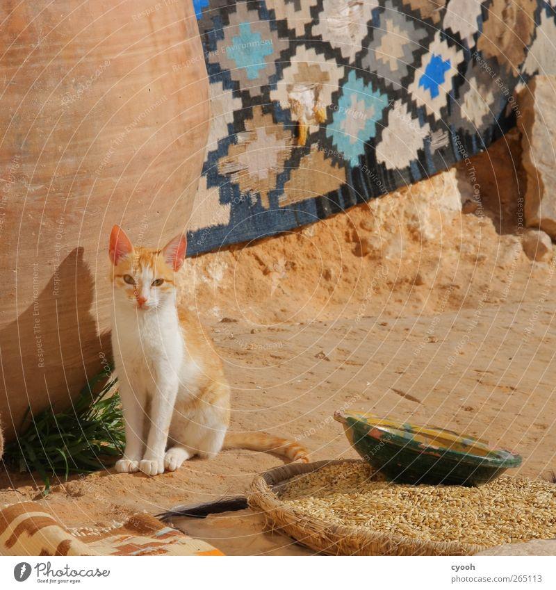 Die Ohren spitzen... Katze schön Sommer Tier Tierjunges beobachten einfach Getreide dünn hören Wachsamkeit Neigung Haustier Teppich hässlich Innenhof