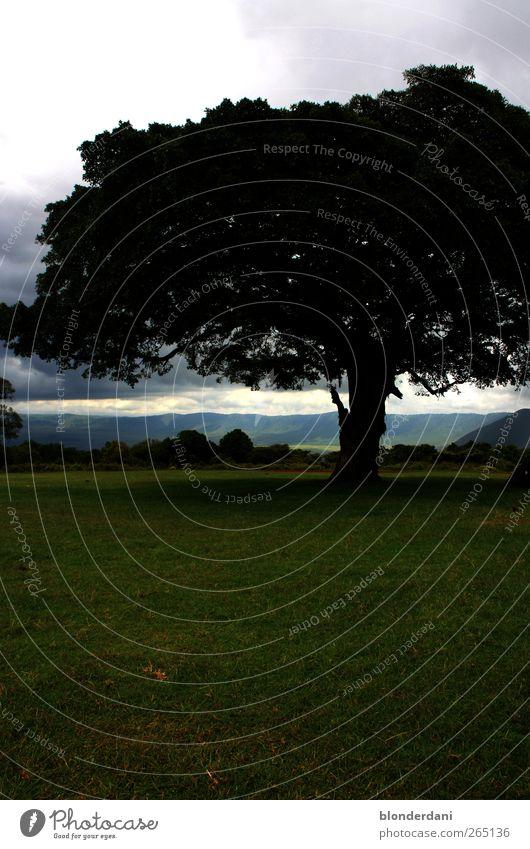 alt wie ein baum... Freizeit & Hobby Tourismus Safari Sommer Umwelt Natur Landschaft Wolken Horizont Baum Blatt Wiese Tansania ruhig Ferne Erde Tal Vulkankrater