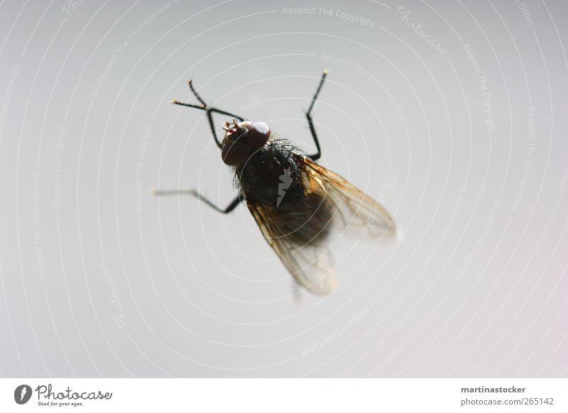 du kleine Fliege Himmel weiß Tier schwarz ruhig Ferne Auge gelb kalt Freiheit Bewegung Luft Schwimmen & Baden Glas fliegen wild