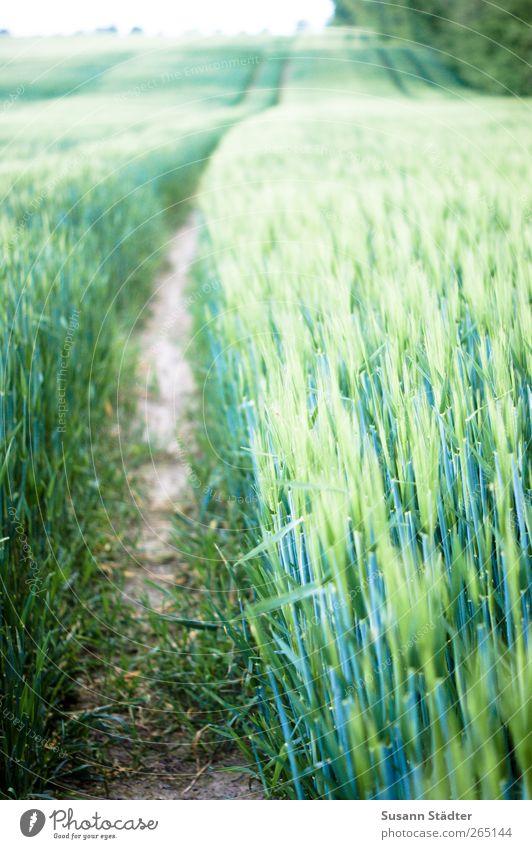 ll llll Pflanze Feld Wachstum Sträucher Hügel Getreide Landwirtschaft Kornfeld Ähren Getreidefeld Nutzpflanze Feldfrüchte