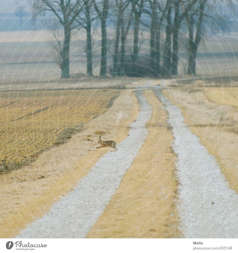 Lauf! Natur Baum Tier gelb Umwelt Landschaft Freiheit Wege & Pfade Frühling klein braun Feld Wildtier laufen natürlich frei