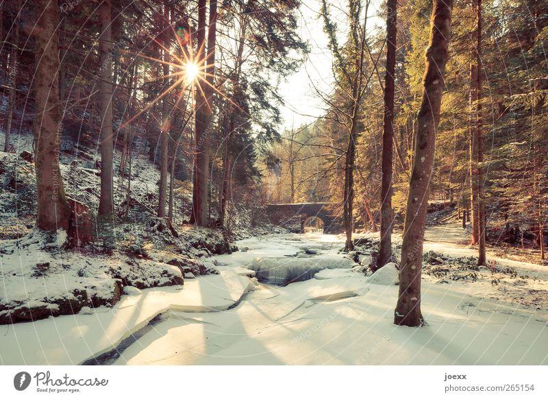 Brücke Himmel Natur weiß schön Baum Sonne Winter schwarz ruhig Wald gelb kalt Schnee Wege & Pfade Eis braun
