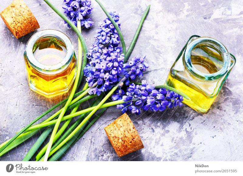 Extraktion von Blütenhyazinthe Essenz Flasche Hyazinthe Blume Aromatherapie Erdöl notwendig natürlich Kräuterbuch Gesundheit Medizin Wellness Schönheit Glas