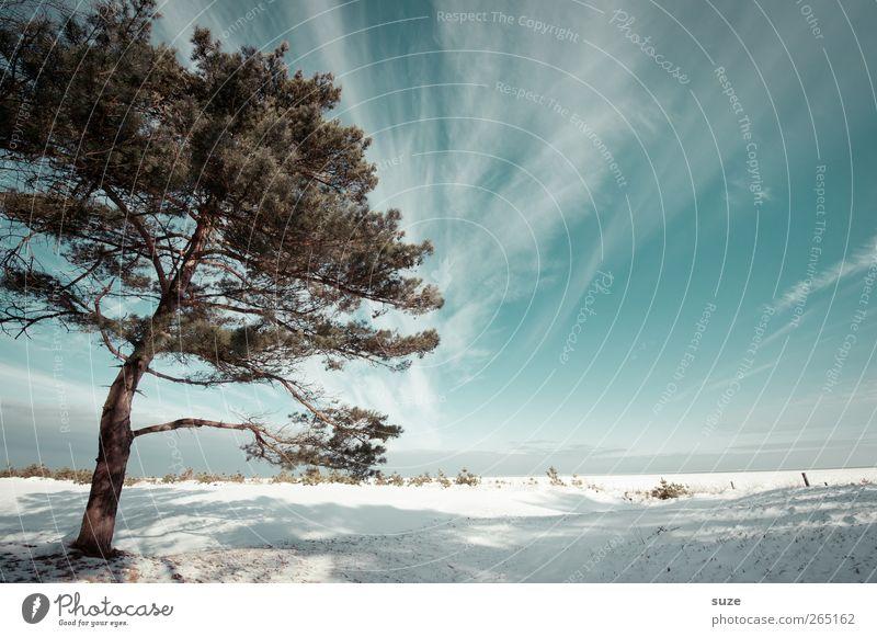 Kiefer Himmel Natur blau weiß Baum Strand Wolken Winter Landschaft Umwelt kalt Schnee Küste hell Luft Horizont
