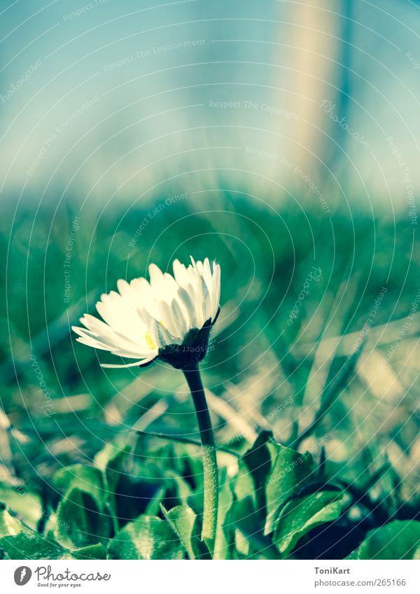 Flower in Green Pflanze Blume ruhig Wiese Frühling Blüte Idylle Frühlingsgefühle Wildpflanze