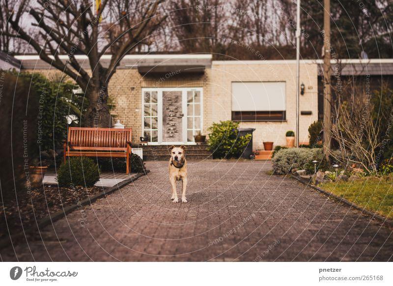 Wer kommt da? Hund Natur Baum Freude Tier Haus Fenster Wand Gefühle Garten Mauer Wetter Tür Platz außergewöhnlich Abenteuer