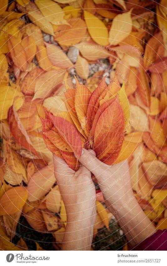 bunte Blätter Freizeit & Hobby wandern Hand Finger Herbst Blatt Garten Park Wald wählen beobachten Erholung festhalten Freundlichkeit Fröhlichkeit gold orange