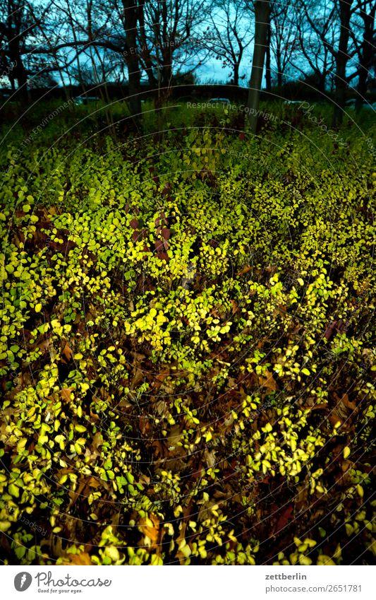 Parkplatz Priesterweg Natur grün Blatt Wald Herbst Textfreiraum Sträucher Herbstlaub November Oktober Unterholz