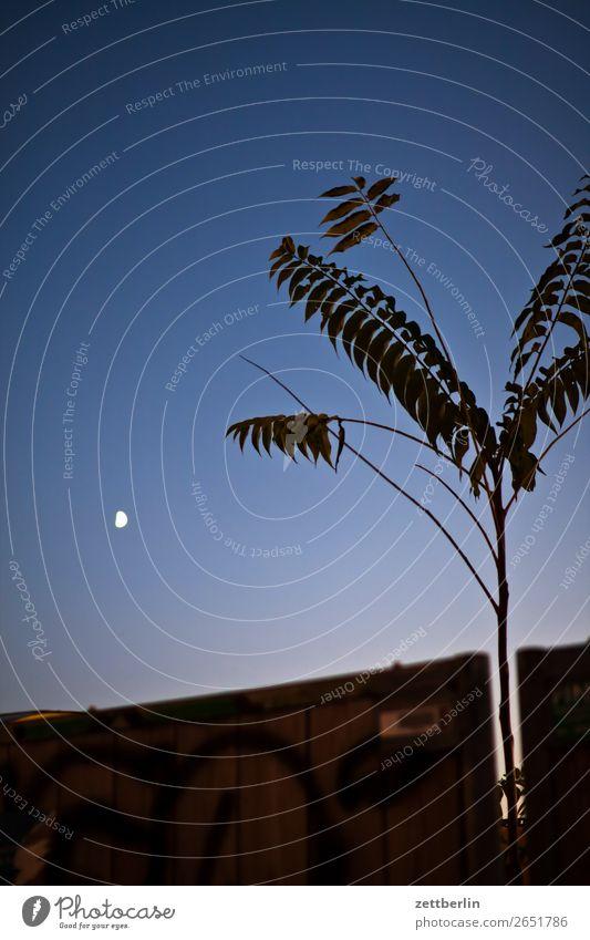 Götterbaum mit Mond Abend Abenddämmerung Berlin Farbenspiel Feierabend Himmel Himmel (Jenseits) Nacht Nachthimmel Schöneberg Sonnenuntergang Stadt Stadtleben