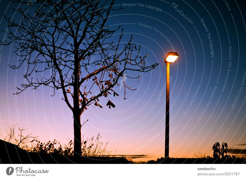 Beleuchteter Einzelbaum Abend Abenddämmerung Berlin Farbenspiel Feierabend Himmel Himmel (Jenseits) Schöneberg Sonnenuntergang Stadt Stadtleben Baum Blatt
