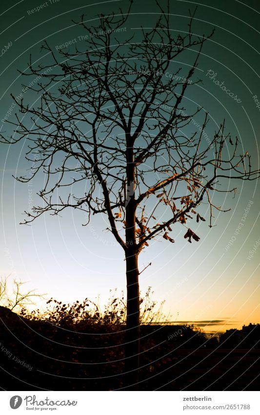 Einzelbaum Abend Abenddämmerung Berlin Farbenspiel Feierabend Himmel Himmel (Jenseits) Schöneberg Sonnenuntergang Stadt Baum Blatt Baumstamm Ast Einsamkeit