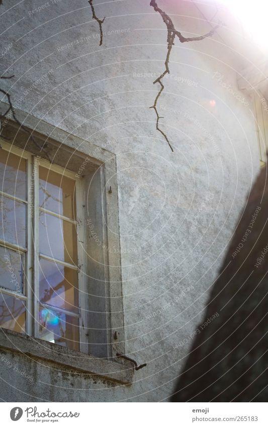 old but gold Ast Mauer Wand Fassade Fenster Beton Betonwand Fensterscheibe Fensterbrett Fensterrahmen alt grau Farbfoto Gedeckte Farben Außenaufnahme