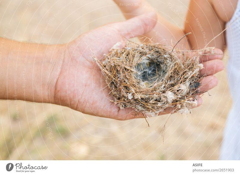 Leeres Nest in Papas Hand Leben Sommer Kind Schule Kleinkind Eltern Erwachsene Vater Natur Vogel Liebe klein Neugier Tochter Mädchen Elternschaft Menschen