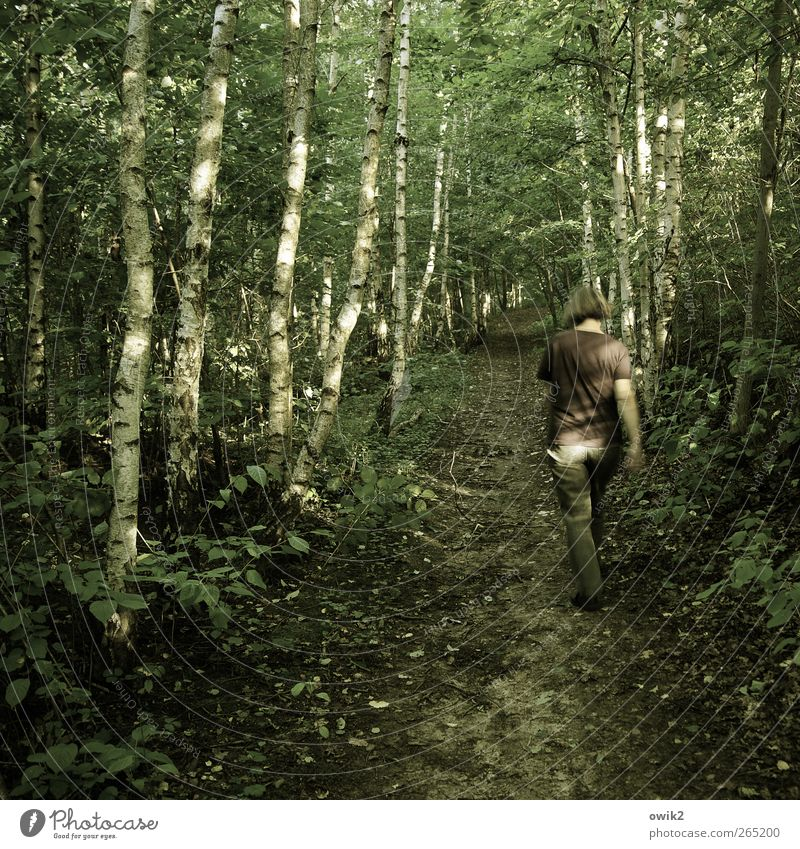 Dschungelcamp Mensch Frau Natur Baum Pflanze Wald Erwachsene Umwelt Landschaft feminin Frühling Wetter gehen laufen Klima wandern