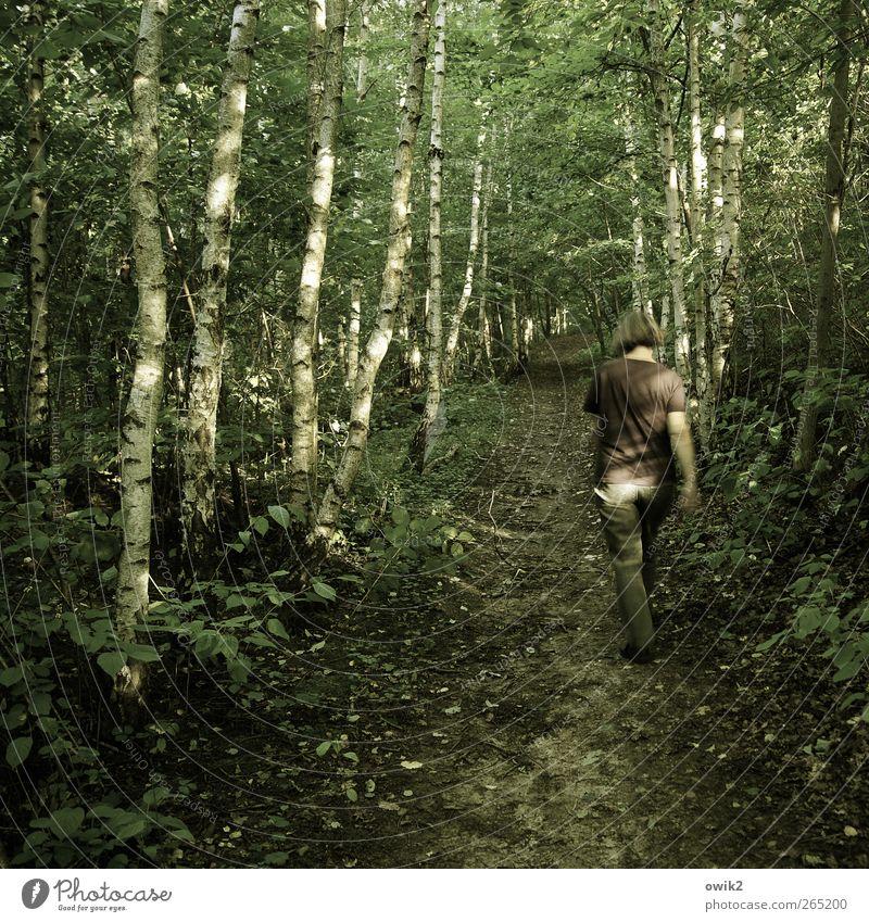 Dshungelcamp Ausflug wandern Spaziergang Spazierweg Mensch feminin Frau Erwachsene 1 Umwelt Natur Landschaft Pflanze Frühling Klima Wetter Schönes Wetter Baum