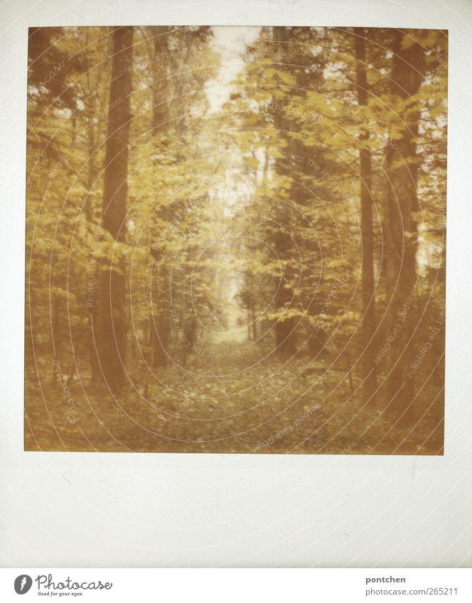 Polaroid. Wald im Herbst. Natur, Bäume. waldweg Umwelt Baum dunkel Blatt Baumstamm Farbfoto Gedeckte Farben Außenaufnahme