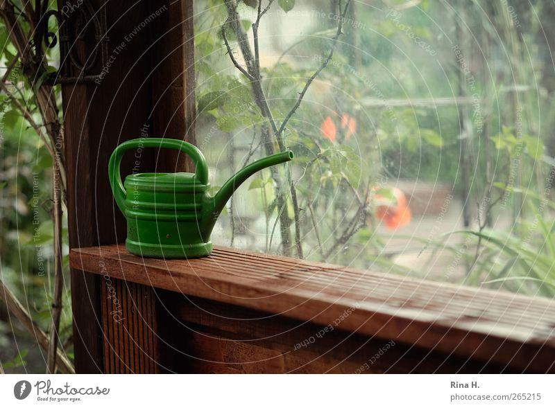 Opas Gartenlaube II grün Pflanze Sommer Garten Zufriedenheit warten Klima authentisch Schönes Wetter Lebensfreude Schrebergarten Gießkanne Gartenhaus