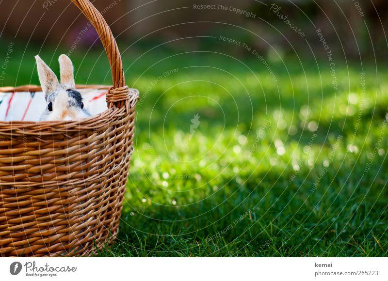 Österlicher Einkaufskorb Natur Pflanze grün Sonne Tier Umwelt Gras Frühling Garten sitzen niedlich Schönes Wetter Neugier Ostern Tiergesicht Haustier