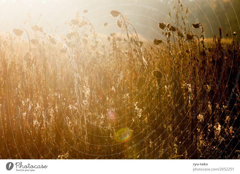 Zwischen Sommer und Herbst Natur Pflanze schön ruhig Wärme Zufriedenheit wild leuchten Feld authentisch Schönes Wetter Vergänglichkeit trocken Gelassenheit