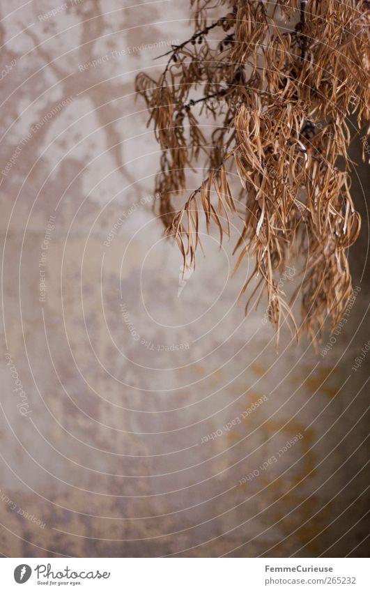 Withered. Sträucher vertrocknet trocken buschig hängen wandern splittern Splitter Orange braun violett Pastellton verfallen Verfall hängend
