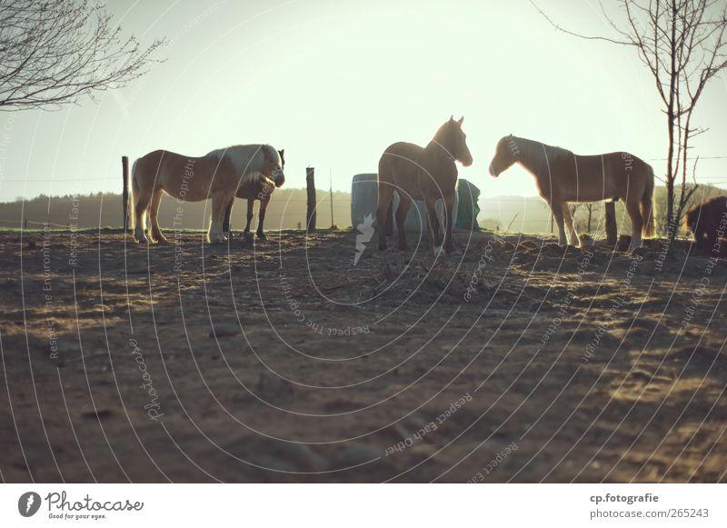 Auf dem Rücken... Baum Sonne Winter Frühling Tiergruppe Pferd Zaun