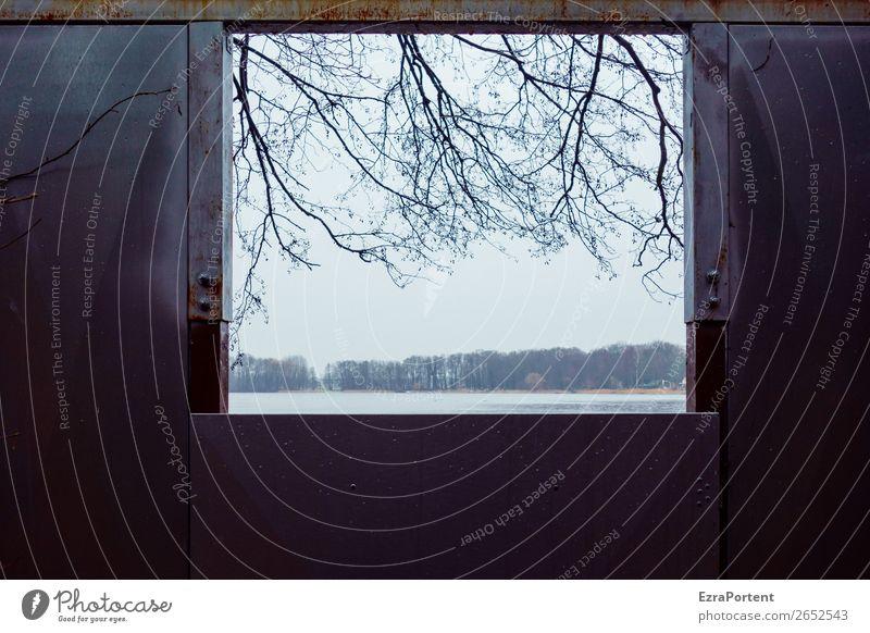 die Wetteraussichten Umwelt Natur Landschaft Herbst Winter Eis Frost Pflanze Baum Küste See kalt Fenster Aussicht Fensterblick Ast Himmel Farbfoto Außenaufnahme