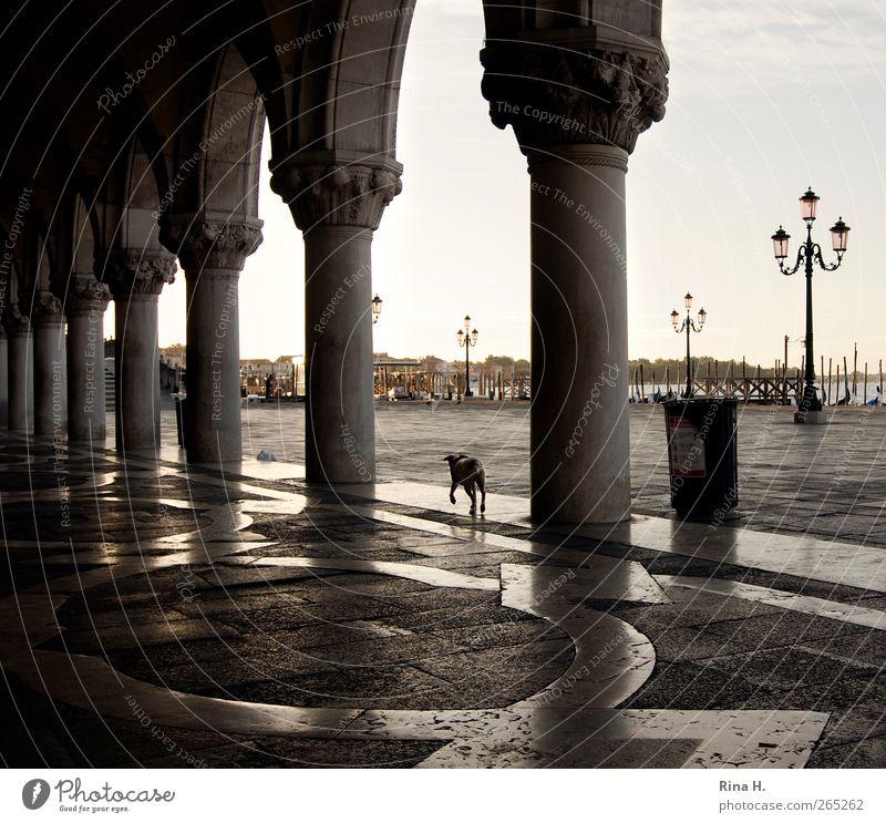 Hund sucht Herrchen Hund Ferien & Urlaub & Reisen Sommer Tier Gebäude gehen Platz Italien Schönes Wetter Laterne Haustier Sehenswürdigkeit Venedig Bekanntheit Müllbehälter Dämmerung