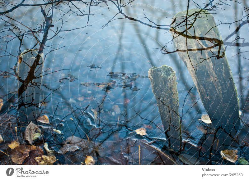 Still ruht der See Natur blau Wasser Blatt ruhig Doppelbelichtung Teich welk Holzpfahl Zweige u. Äste