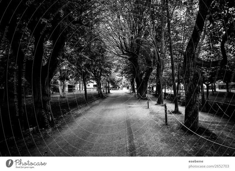 Bäume auf einem Naturpfad schön Ferien & Urlaub & Reisen Sommer Sonne Garten Paar Umwelt Landschaft Herbst Nebel Baum Blatt Park Wald Straße Wege & Pfade alt