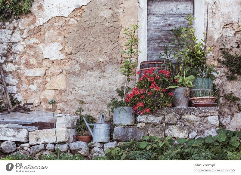 Istrische Idylle Wand Blumen Altstadt alt verfallen retro Gieskannen Garten Steinmauer Fassade Menschenleer Holztür Außenaufnahme historisch Gedeckte Farben