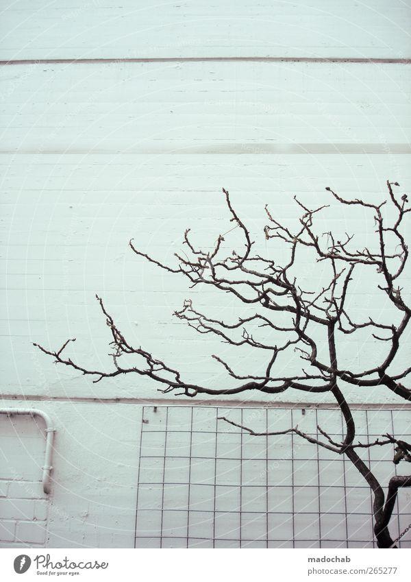 lieblos Stadt Baum Einsamkeit Wand Wege & Pfade Mauer Traurigkeit Armut Hoffnung Ast Schutz Glaube Mut Verfall Trennung Langeweile