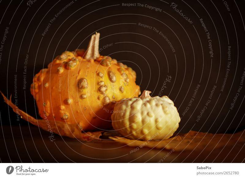 Herbstkürbis dehydrieren ästhetisch dunkel natürlich Wärme braun mehrfarbig gelb orange schwarz Kürbis Kürbiszeit Dekoration & Verzierung Nostalgie mystisch