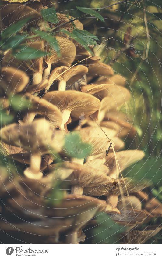 Kolonie Natur Sommer Blatt Wald Herbst Frucht Pilz organisch
