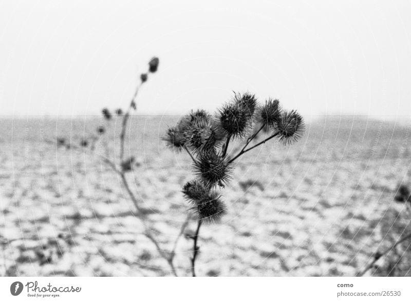 disteln* Distel Feld Winter Jahreszeiten kalt ruhig Einsamkeit Ferne Unschärfe Denken Natur Landschaft leer Pflanze nachdenken