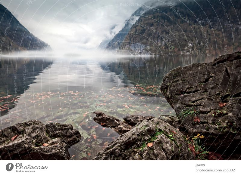 Das Grauen Natur weiß grün Wolken schwarz Landschaft dunkel kalt Berge u. Gebirge See braun Wetter Angst Nebel bedrohlich Seeufer