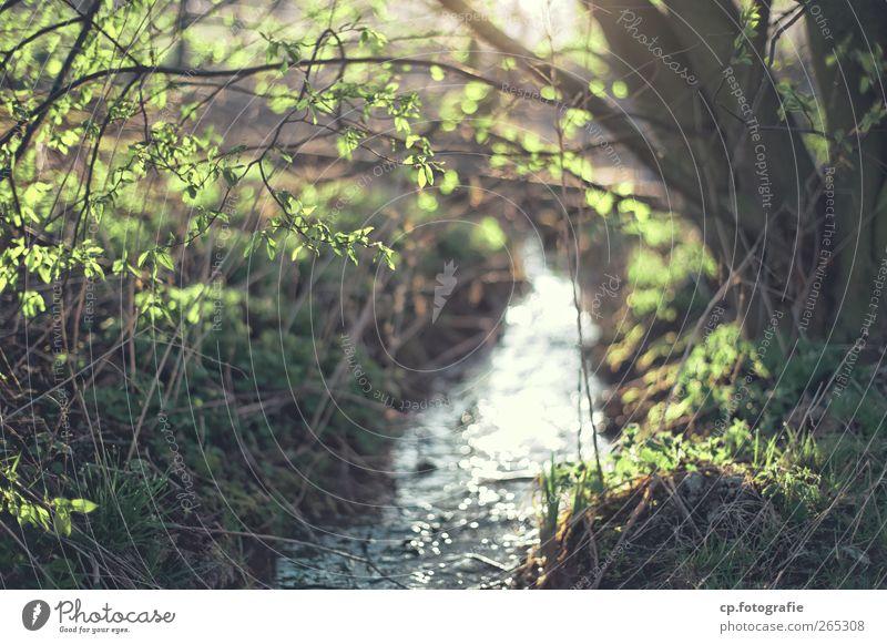 Bach Natur Wasser Baum Pflanze Gras Frühling natürlich Schönes Wetter Bach