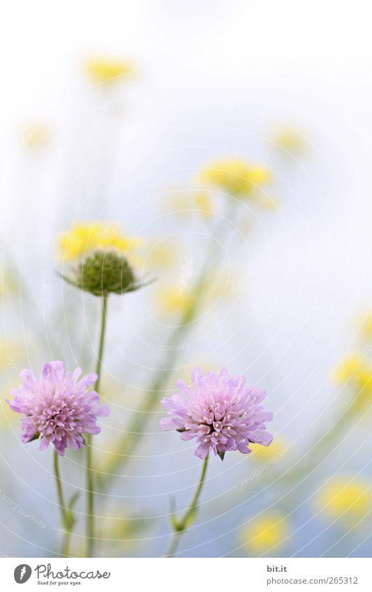Frühlingswiese.. Valentinstag Muttertag Geburtstag Natur Pflanze Wolkenloser Himmel Sommer Schönes Wetter Blume Blüte Wildpflanze Wiese Blühend Duft Wachstum