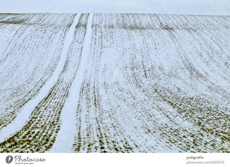 Uckermark Landwirtschaft Forstwirtschaft Umwelt Natur Landschaft Winter Schnee Feld kalt Einsamkeit ruhig Unendlichkeit Ferne Wellenform Linie Spuren Farbfoto
