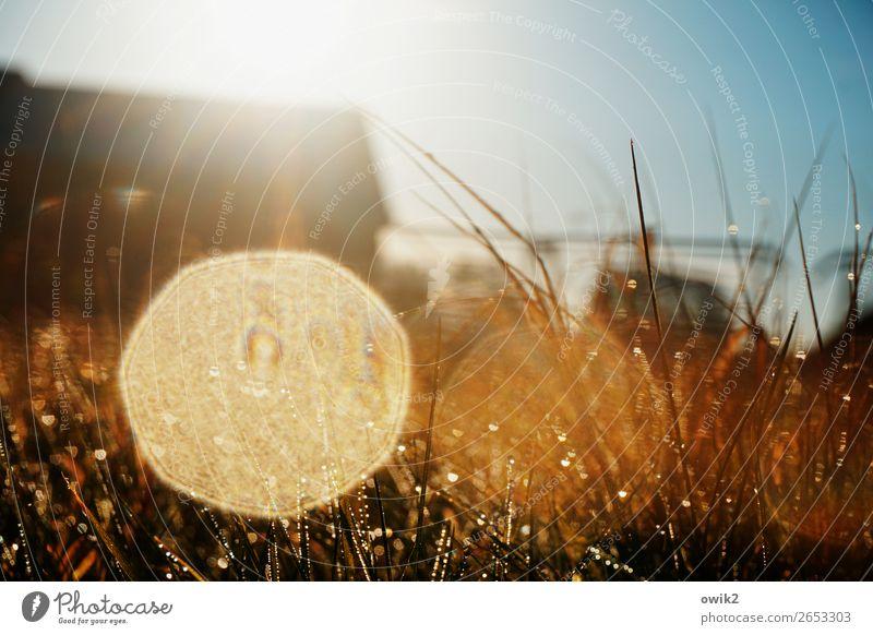 Hochglanzfoto Umwelt Natur Pflanze Wassertropfen Wolkenloser Himmel Horizont Herbst Schönes Wetter Gras Halm Wiese glänzend leuchten fantastisch klein nah unten